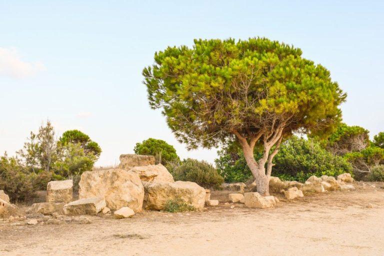 Paphos in February & March